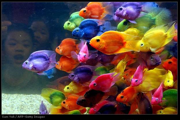 В детстве мы как зачарованные слушаем сказку о золотой рыбке, которая исполняет три любых